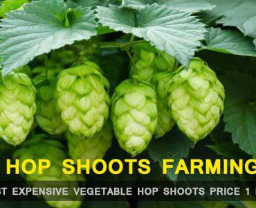 Hop Shoots